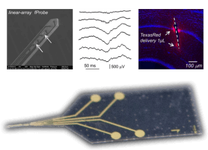 fprobes - microfluidic microprobes for epilepsy research