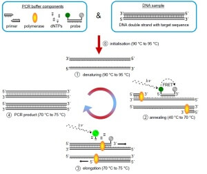 PCR involved reactants and reaction mechanism